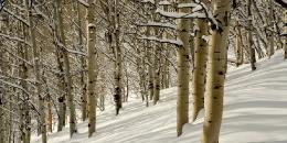 ab-winterwest0024