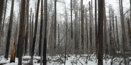 ab-winterwest0096