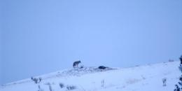 ab-winterwest0124