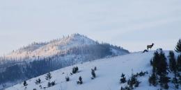 ab-winterwest0126