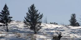 ab-winterwest0137